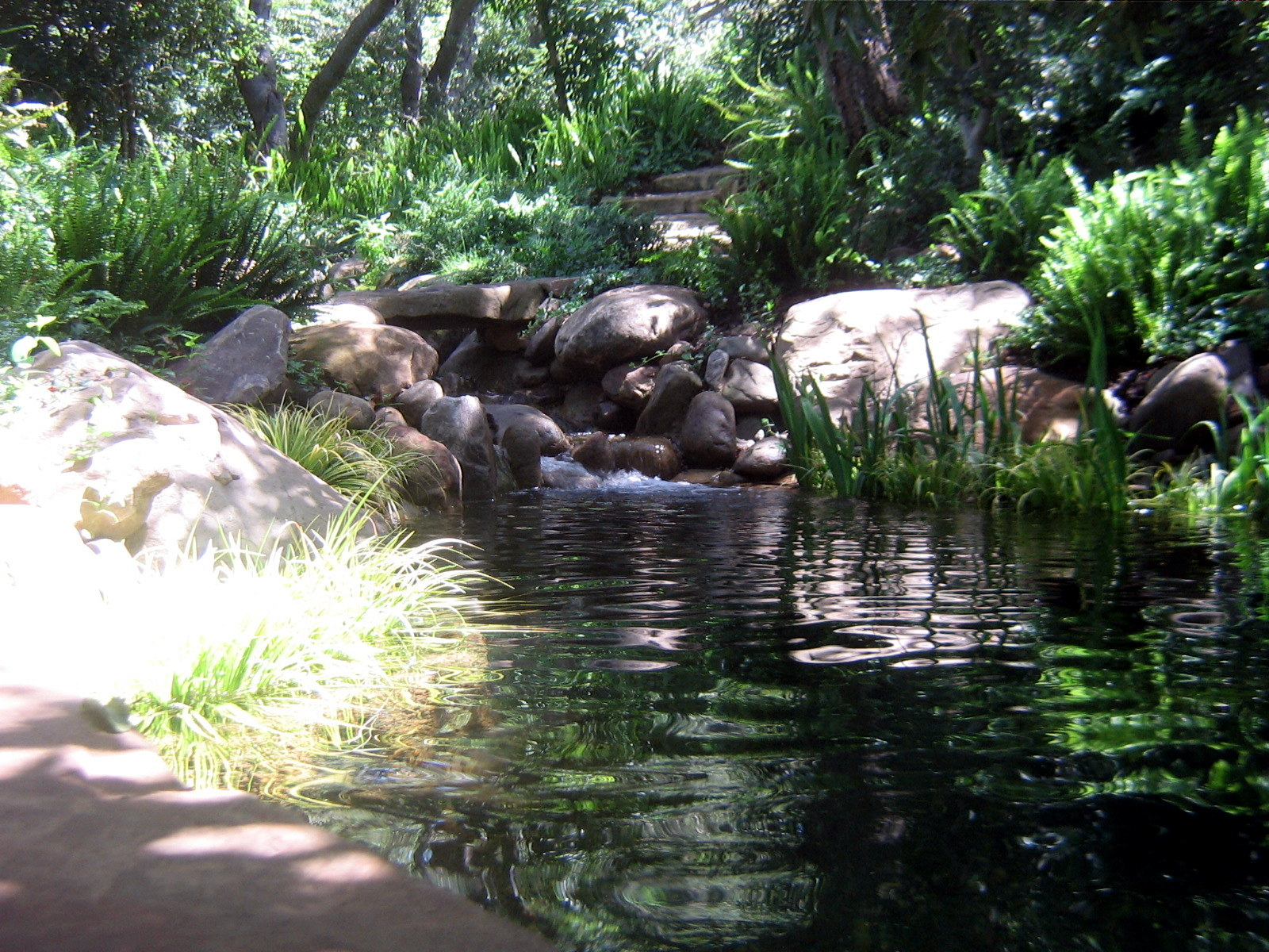 Koi ponds of santa barbara garcia rock and water design blog for Pond shade ideas