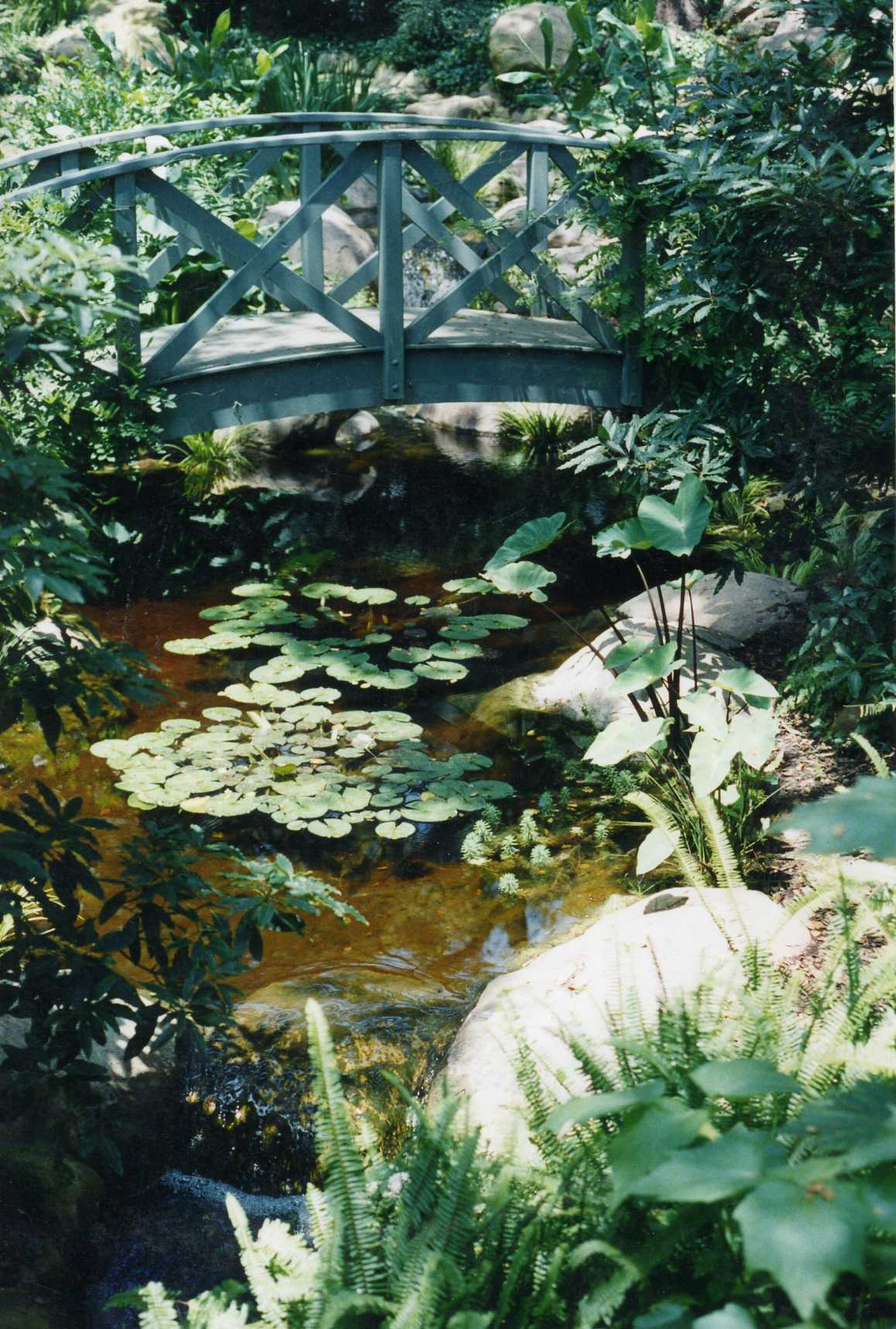 Garcia rock and water design blog for Koi pond shade ideas