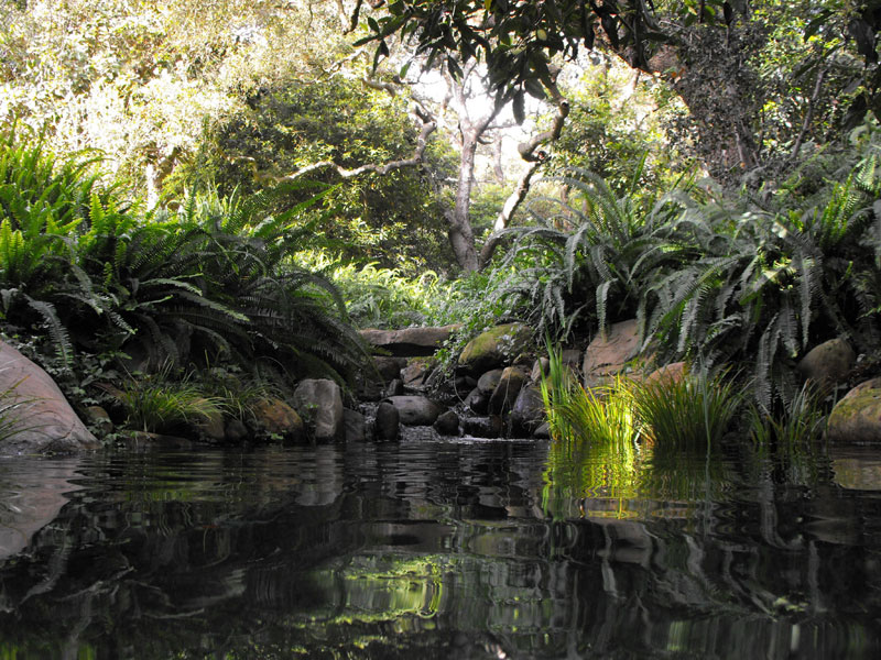 Photo gallery garcia rock and water design blog for Pond shade ideas