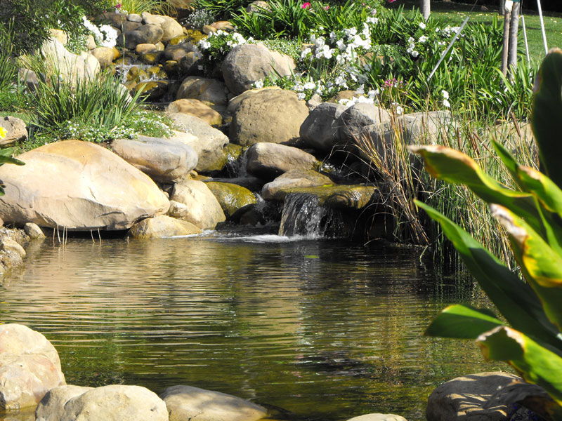 Recent pictures garcia rock and water design blog for Rock ponds designs