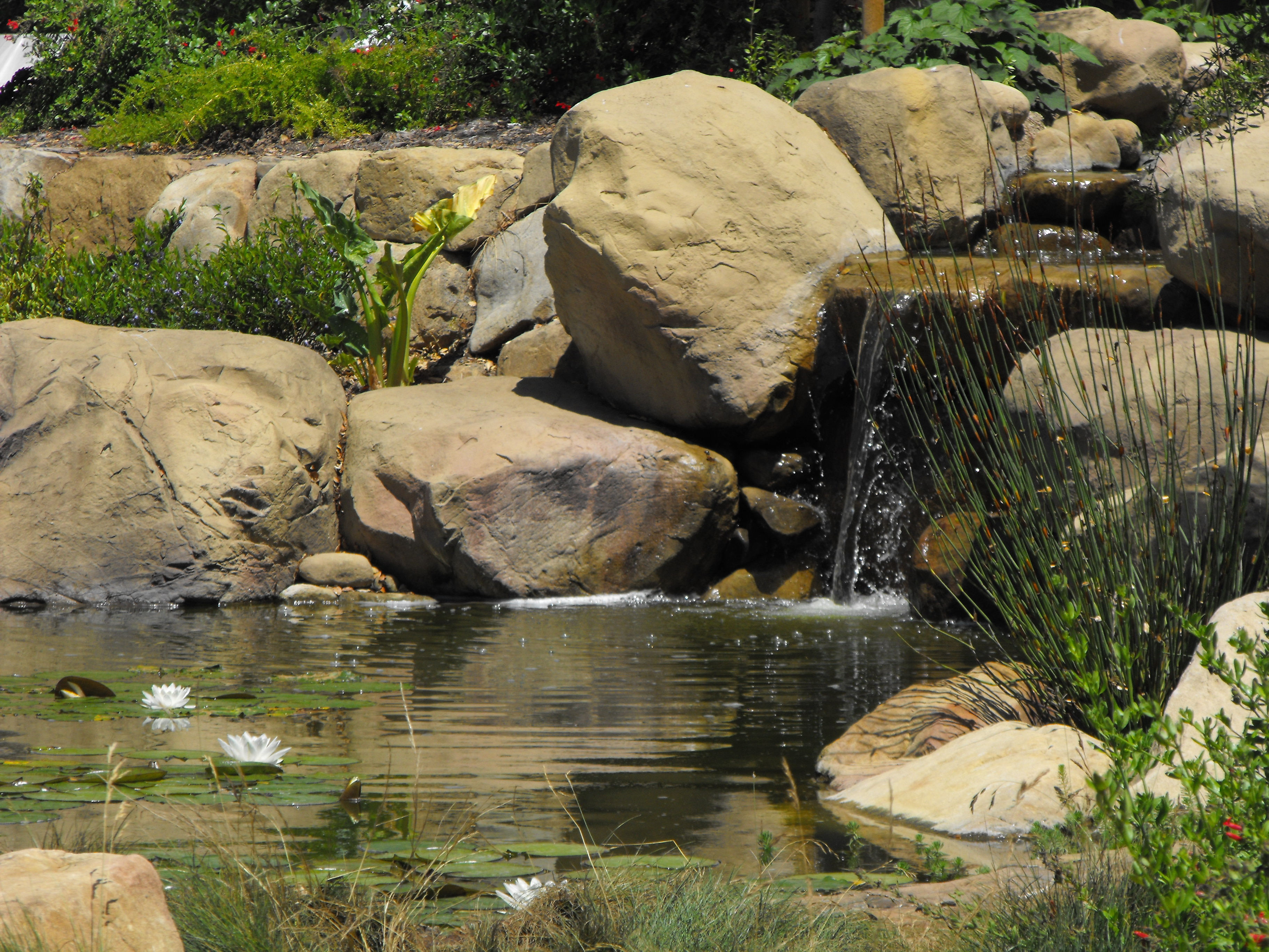 Small Garden Pond In Santa Barbara