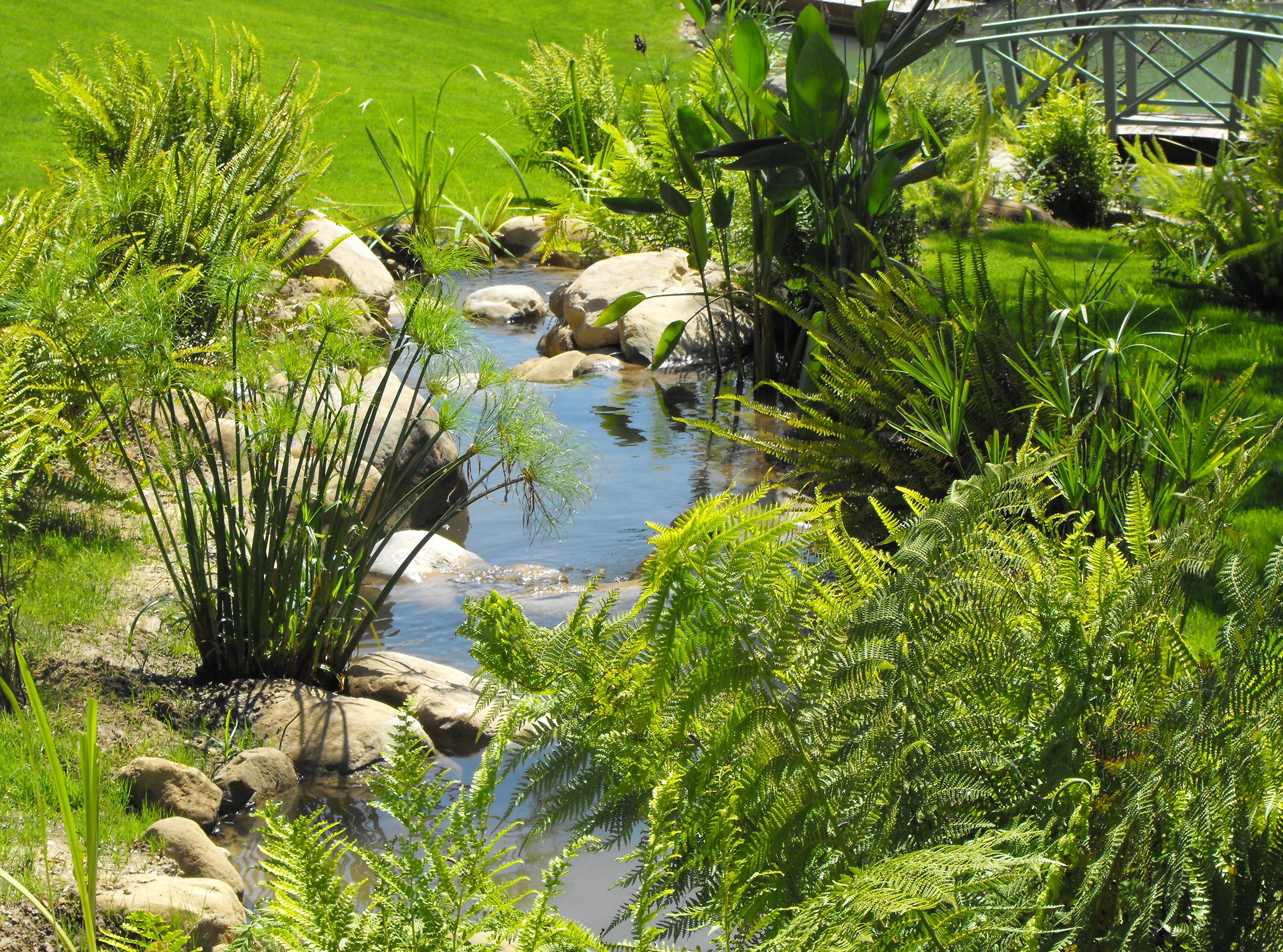 Garcia rock and water design blog for Natural pond plants