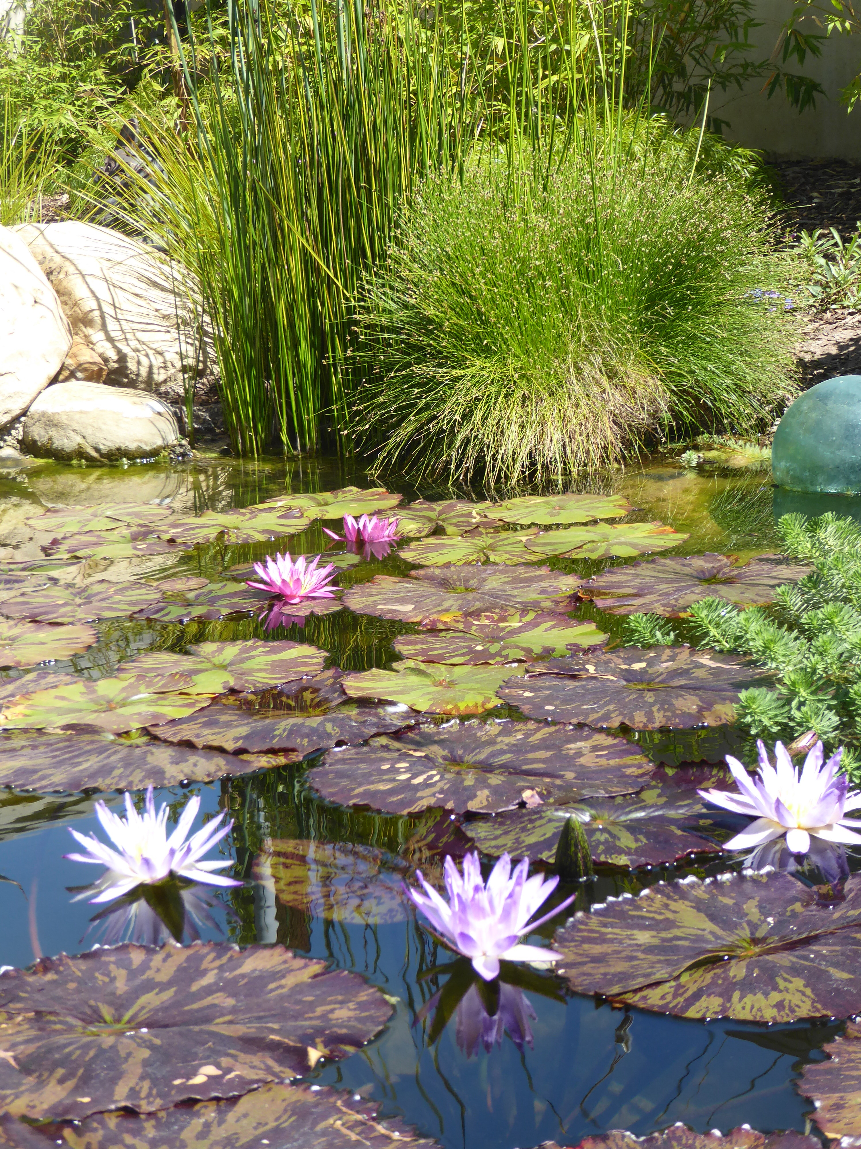 Garcia Rock And Water Design Blog Created To Feature Koi